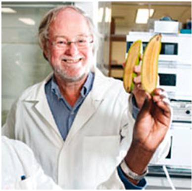 banana-trasngenica