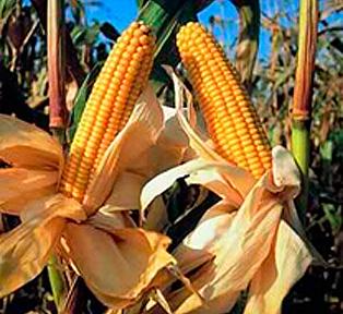 brasil-cultivos