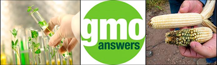 gmo-answer
