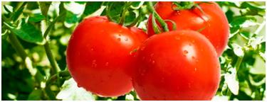 tomate-colesterol