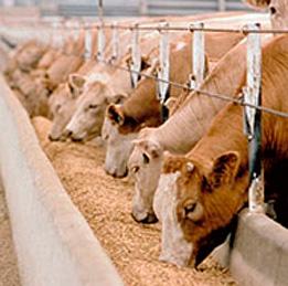 alimentacion-animal
