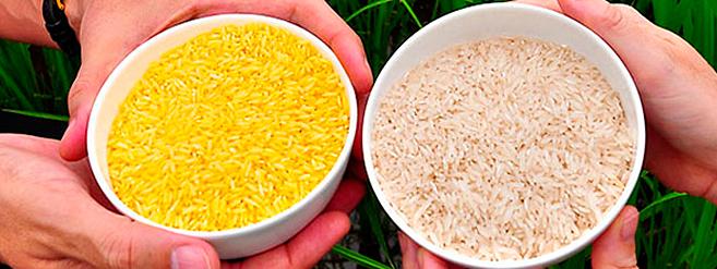 arroz-dorado2