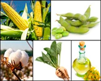 cultivos-convencionales