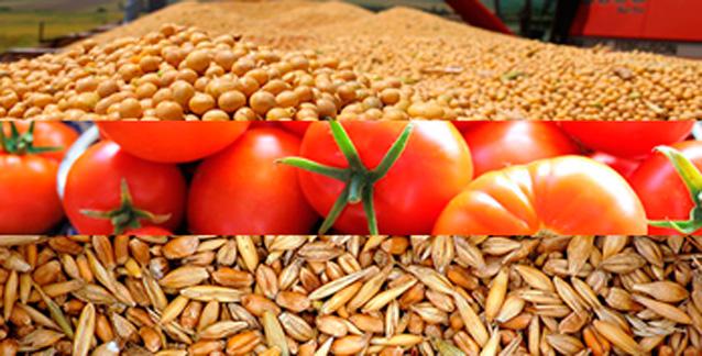 cultivos-medicinales