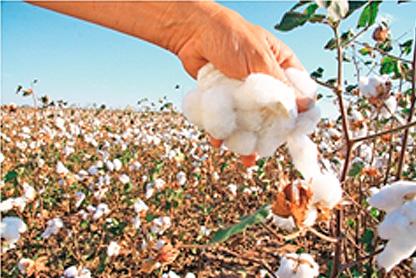 agricultores-bolivianos