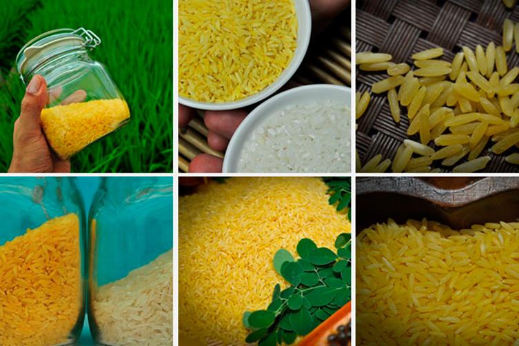 actual-del-arroz-dorado