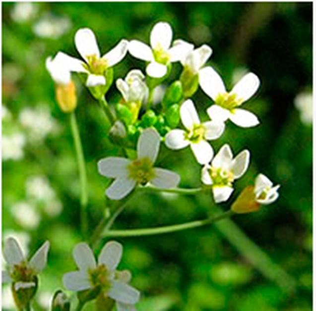 tiempo-de-floracion-de-las-plantas