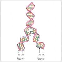 La Estructura Del Adn Los Genes Y El Código Genético Chilebio