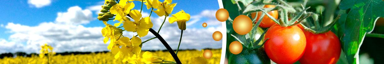 Transgénicos y Bioseguridad