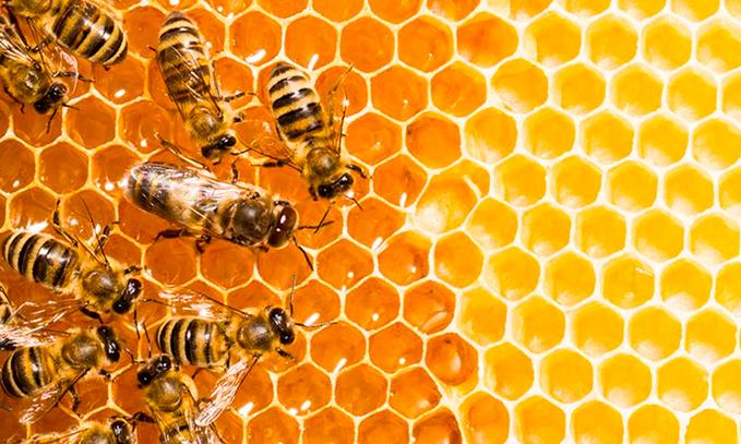 son-realmente-peligrosos-los-cultivos-transgenicos-para-las-abejas
