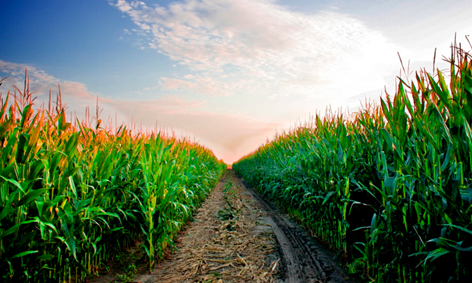 Sustentabilidad-y-beneficios-ambientales-de-los-cultivos-transgenicos