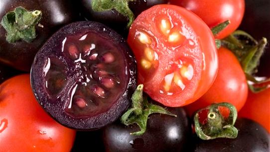 tomate-morado