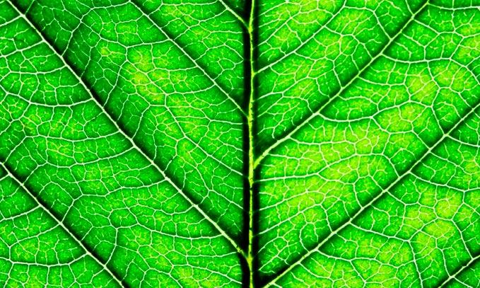 fotosintesis-de-las-plantas