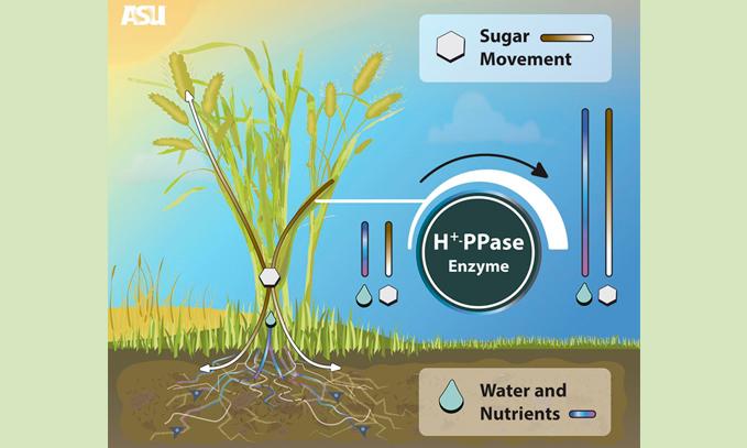 mejoran-el-rendimiento-de-los-cultivos