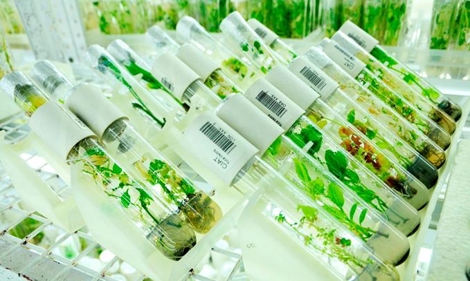 La-propiedad-intelectual-en-semillas-beneficia-a-los-agricultores-y-a-la-sociedad