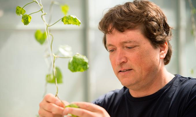 Biologo-identifica-nueva-via-para-luchar-contra-enfermedades-de-plantas