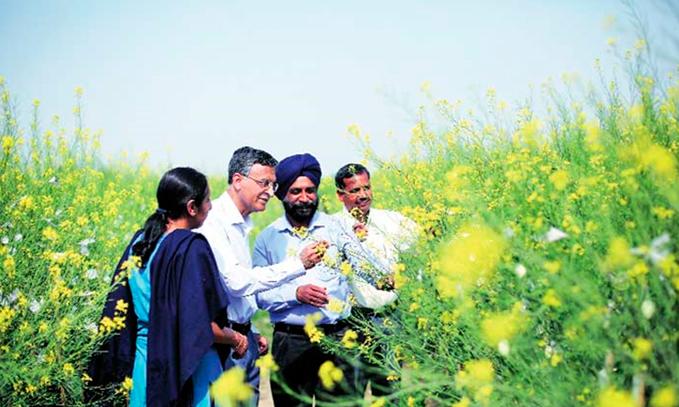 India-esta-cerca-de-aprobar-comercializacion-de-mostaza-transgenica