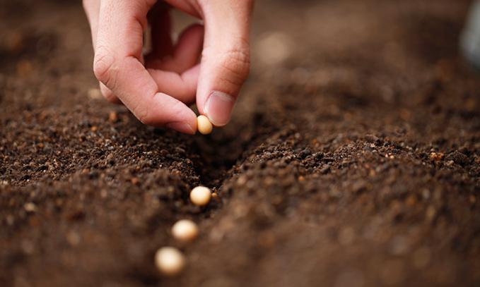 estan-las-grandes-empresas-obligando-a-los-agricultores-a-cultivar-transgenicos