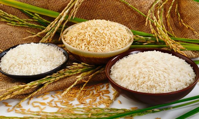Desarrollan-arroz-transgenico-biofortificado-en-aminoacidos-esenciales