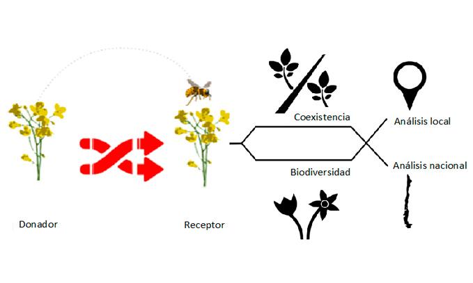 Desarrollan-herramienta-para-estimar-el-potencial-riesgo-de-cruzamiento-entre-cultivos-convencionales,-transgenicos-y-flora-nativa-en-Chile