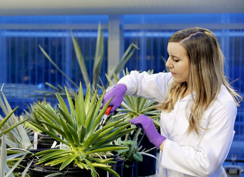 estudio-plantas