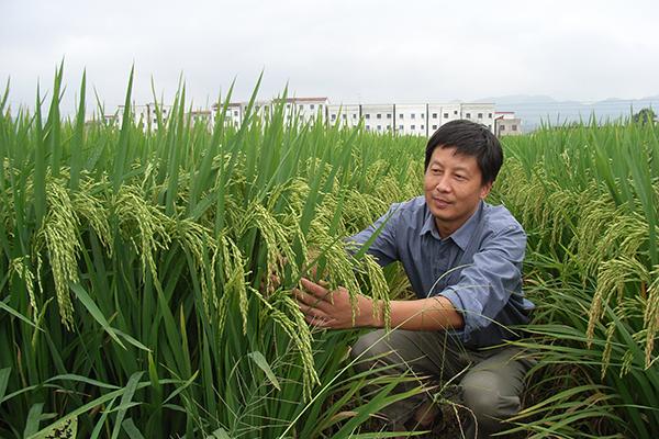 china cultivara